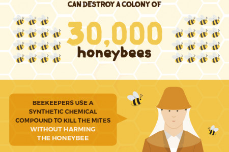 Bee Friendly Gardening  Infographic