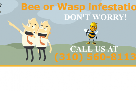 Bee Hive Removal Los angeles Infographic