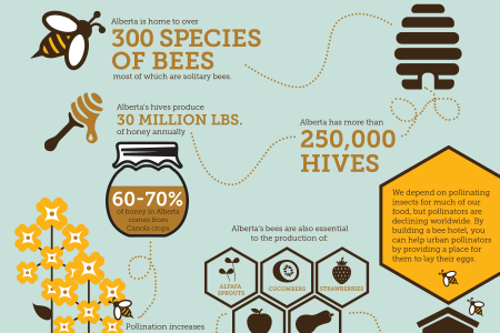 Bee Informed Infographic