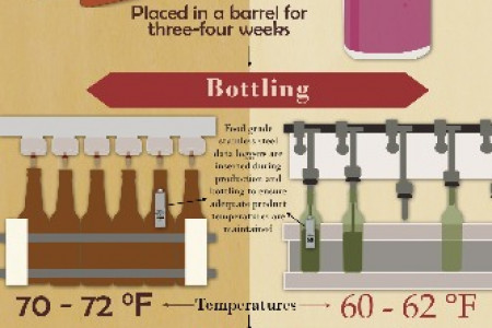 Beer vs. Wine Infographic
