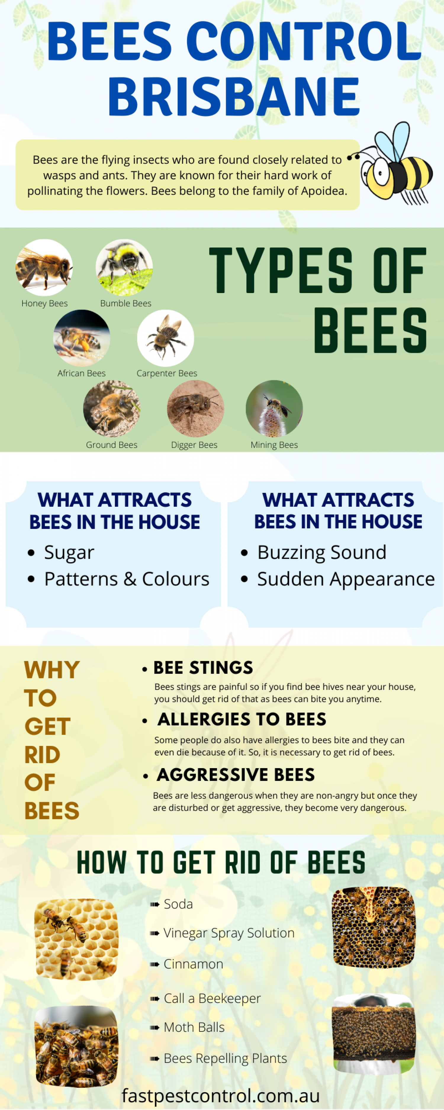 Bees Control Brisbane   Fast Pest Control Bees & Bees Hive Removal Service Infographic