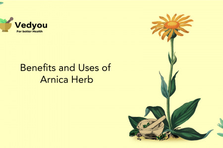 Benefits & Uses of Arnica Herb Infographic