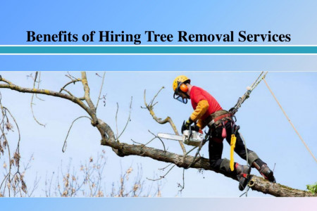 Benefits of Hiring Tree Removal Services   Infographic