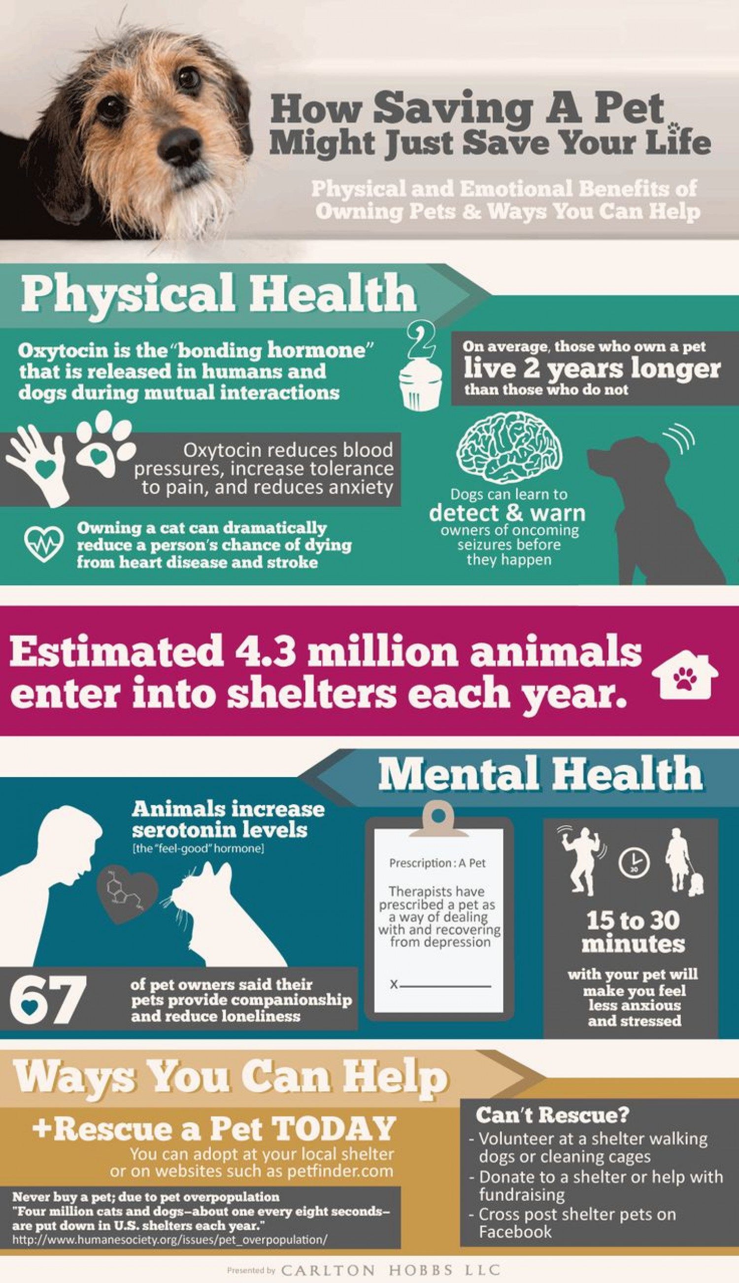 Benefits of Owning a Pet Infographic