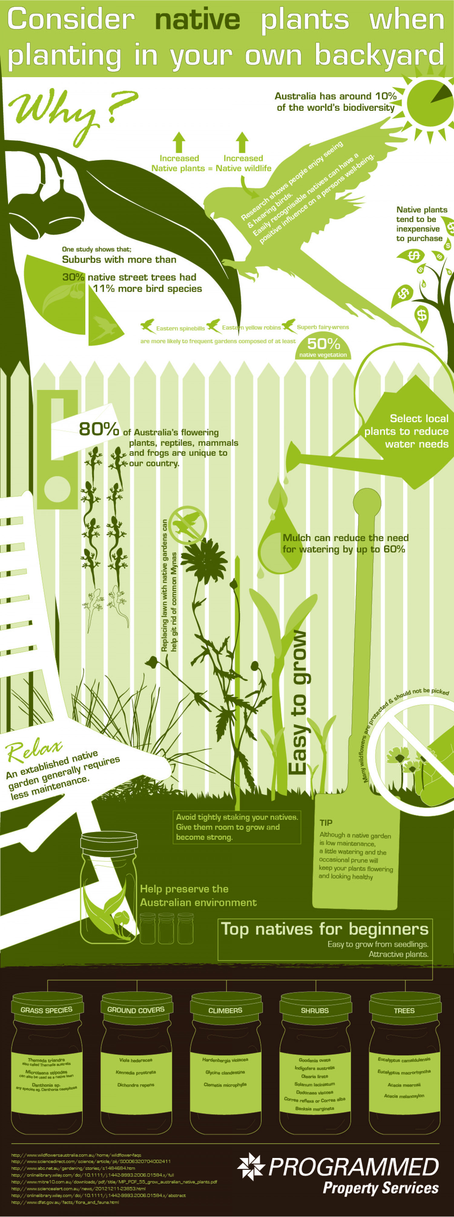 Benefits of Planting Australian Natives in Your Own Backyard Infographic