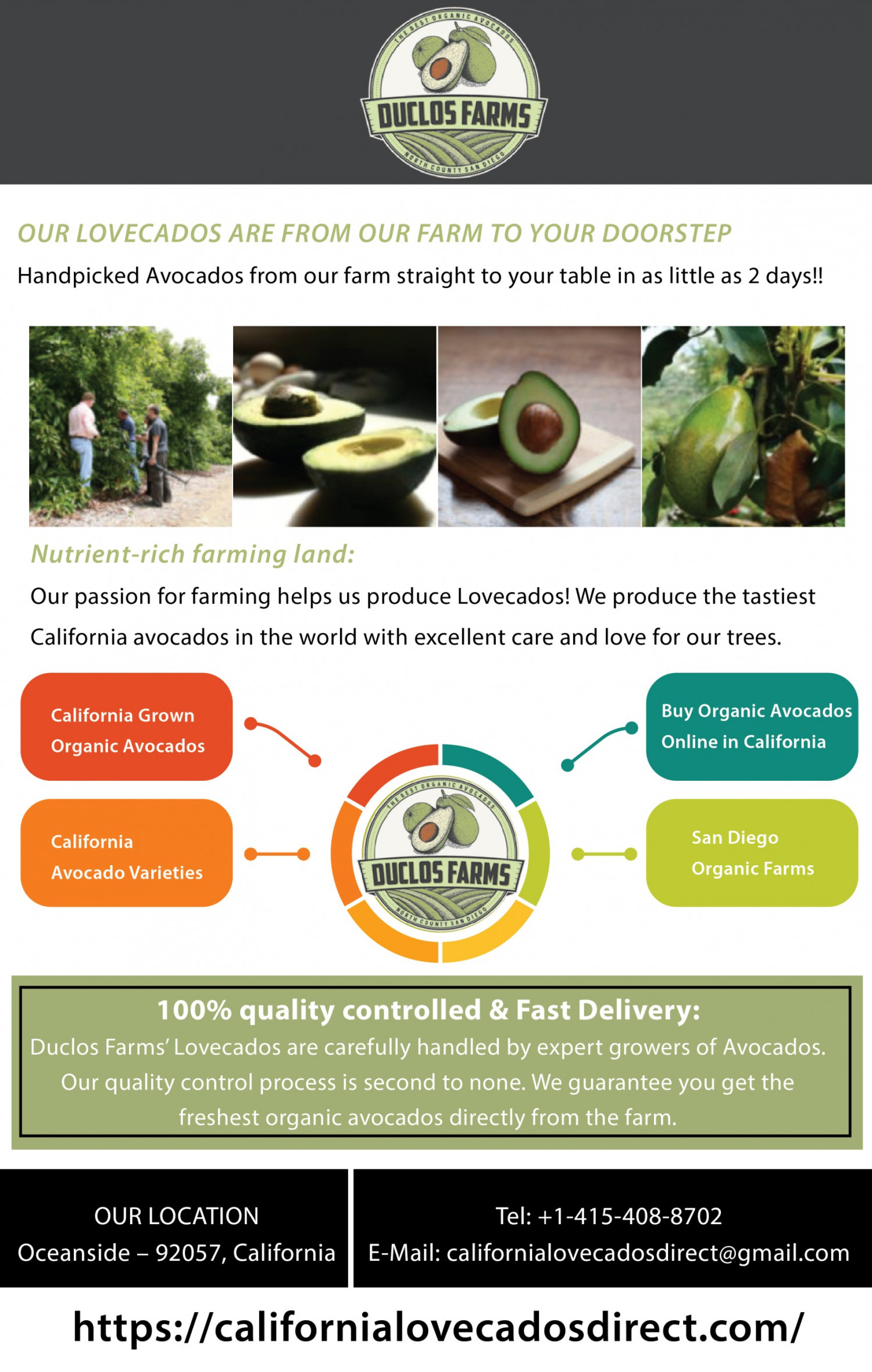 Best Avocados to Buy Infographic