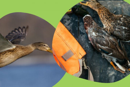 Best Choice of Duck Hunting in Colorado Infographic