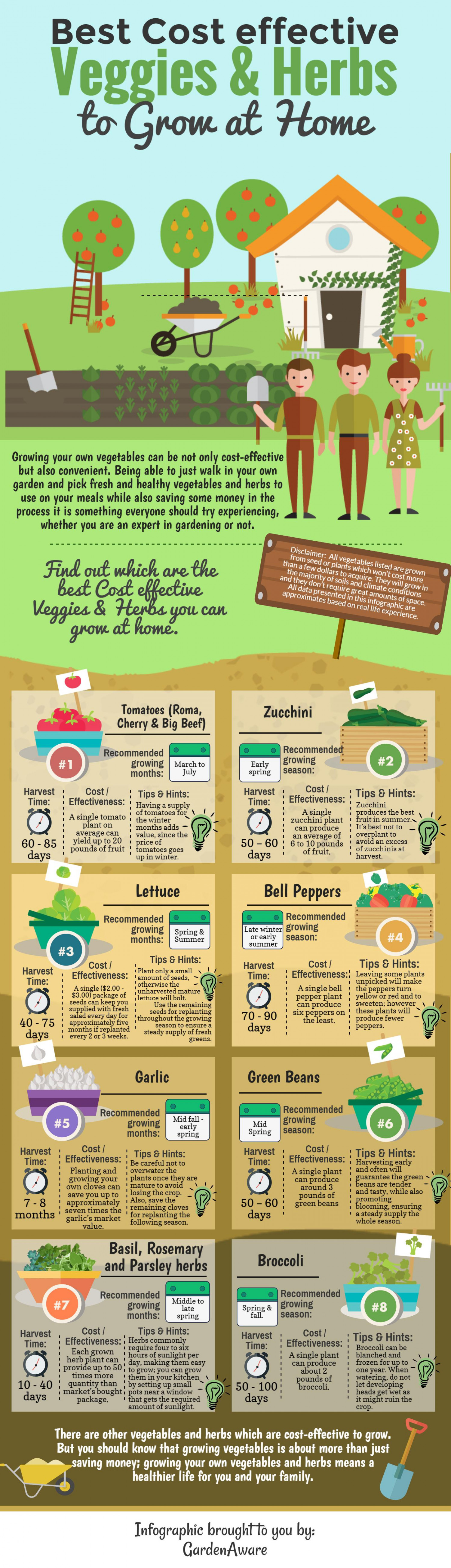 Best cost effective veggies and herbs to grow at home Infographic