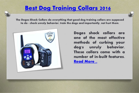 Best dog training collars 2016 Infographic