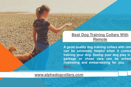 Best dog training collars with remote Infographic