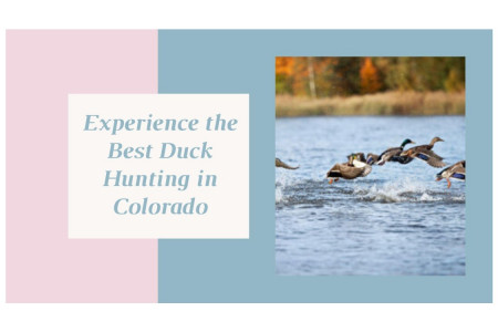 Best Duck Hunting in Colorado Experience Infographic