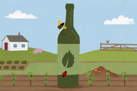 Biodynamic Winemaking vs. Traditional Winemaking Infographic