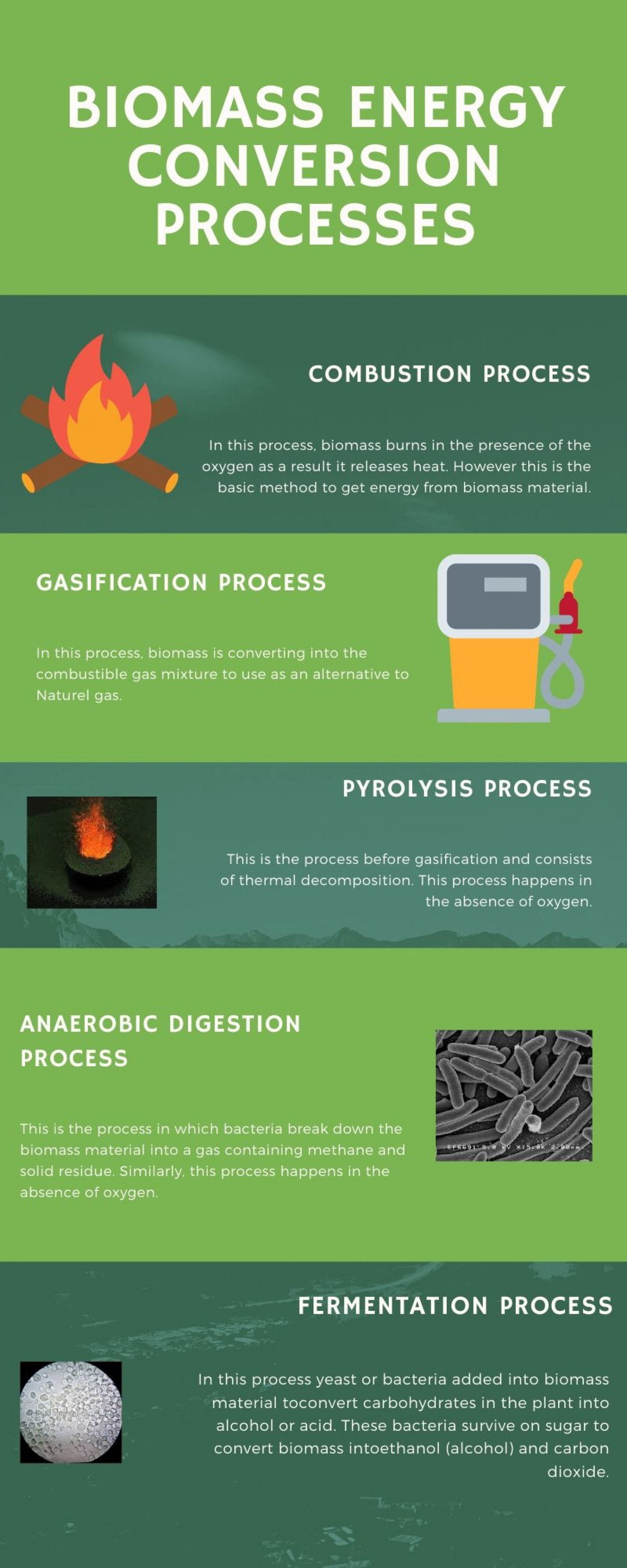 Biomass energy conversion processes Infographic