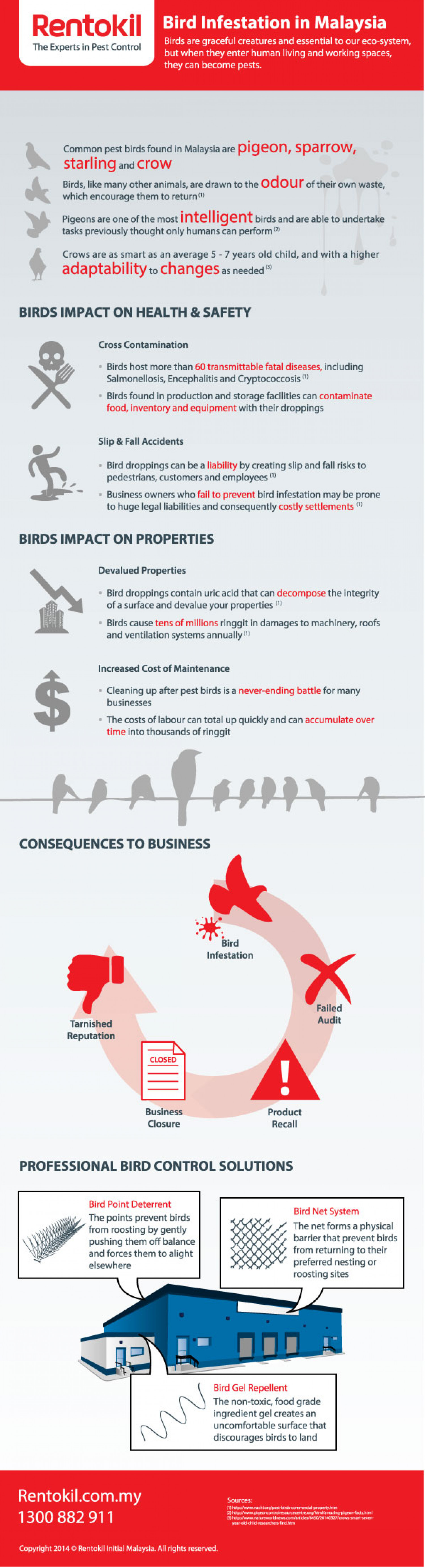 Bird Infestation in Malaysia Infographic