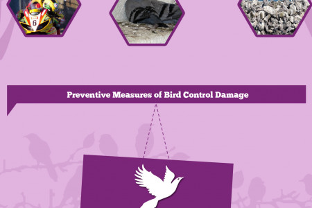 Bird Problem and their Control Measures Infographic
