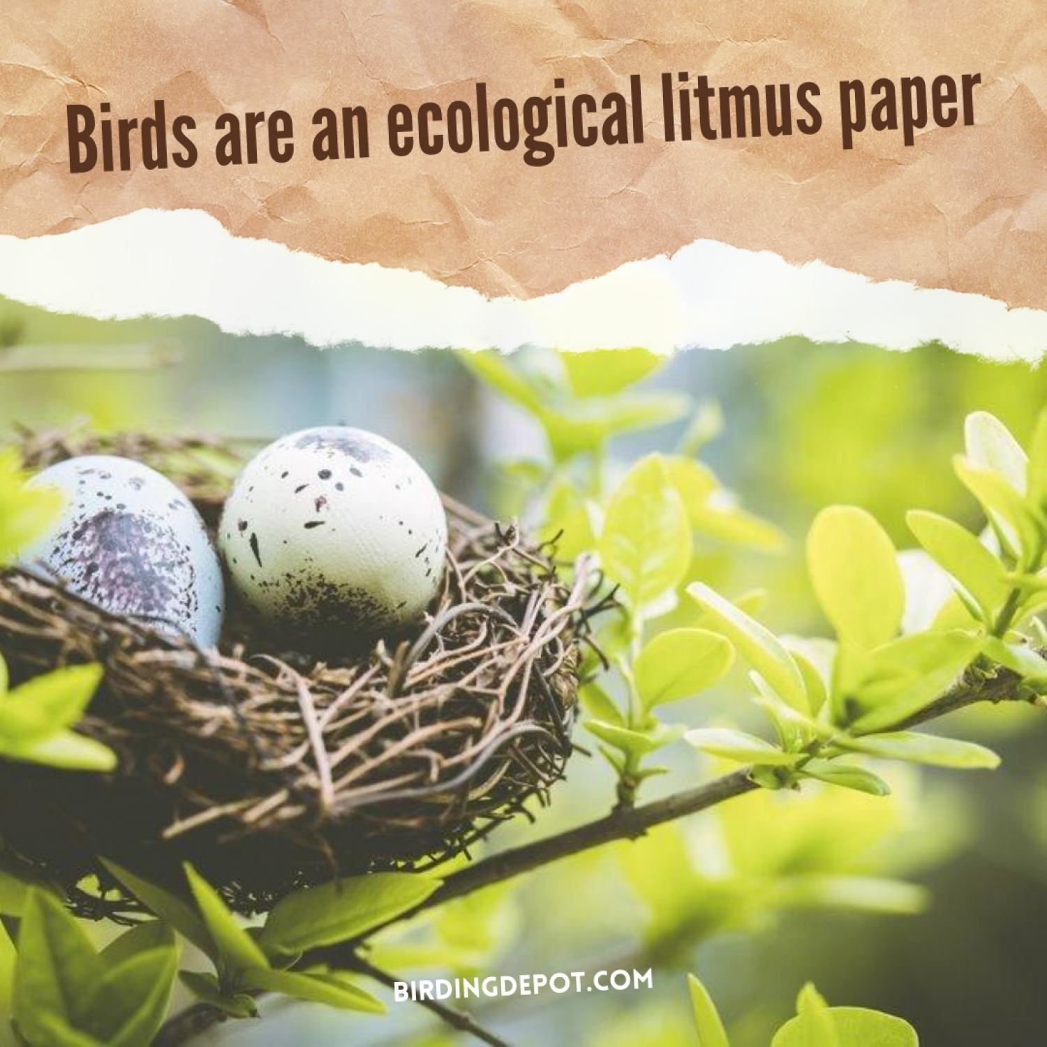 Birds are an ecological litmus paper Infographic
