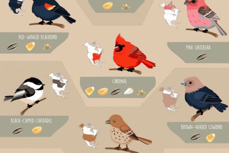 Birds of America Infographic