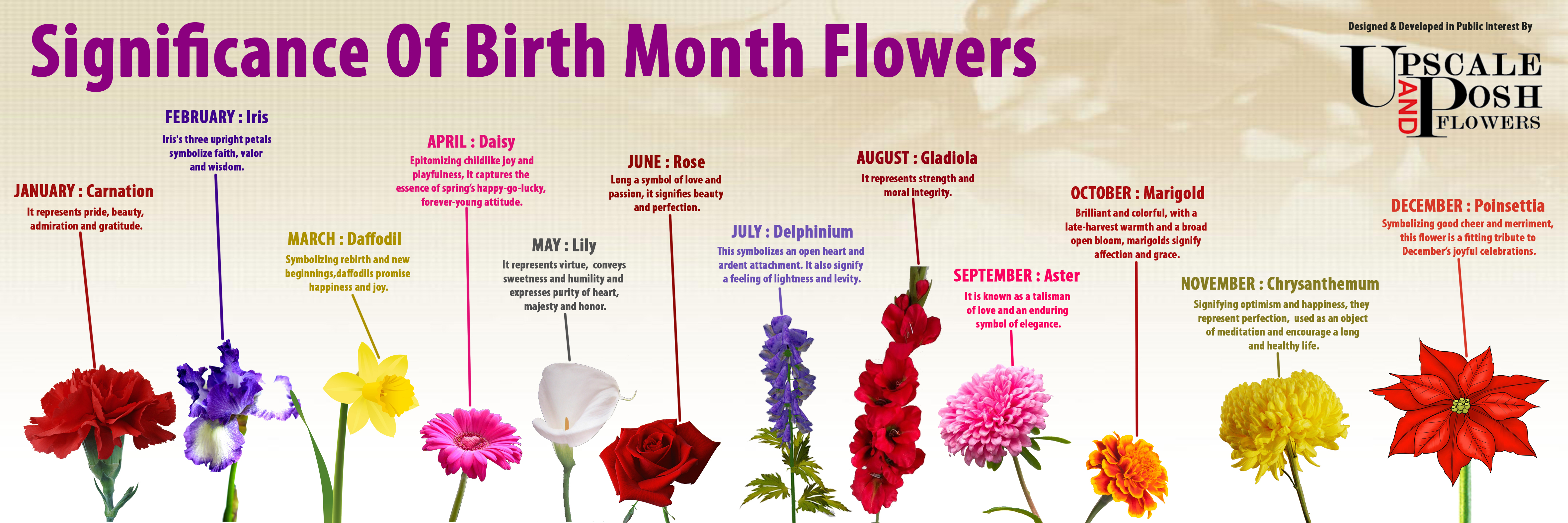 birth month flowers  visual.ly, Natural flower