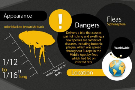 Biting Insects Locations & Appearance Infographic