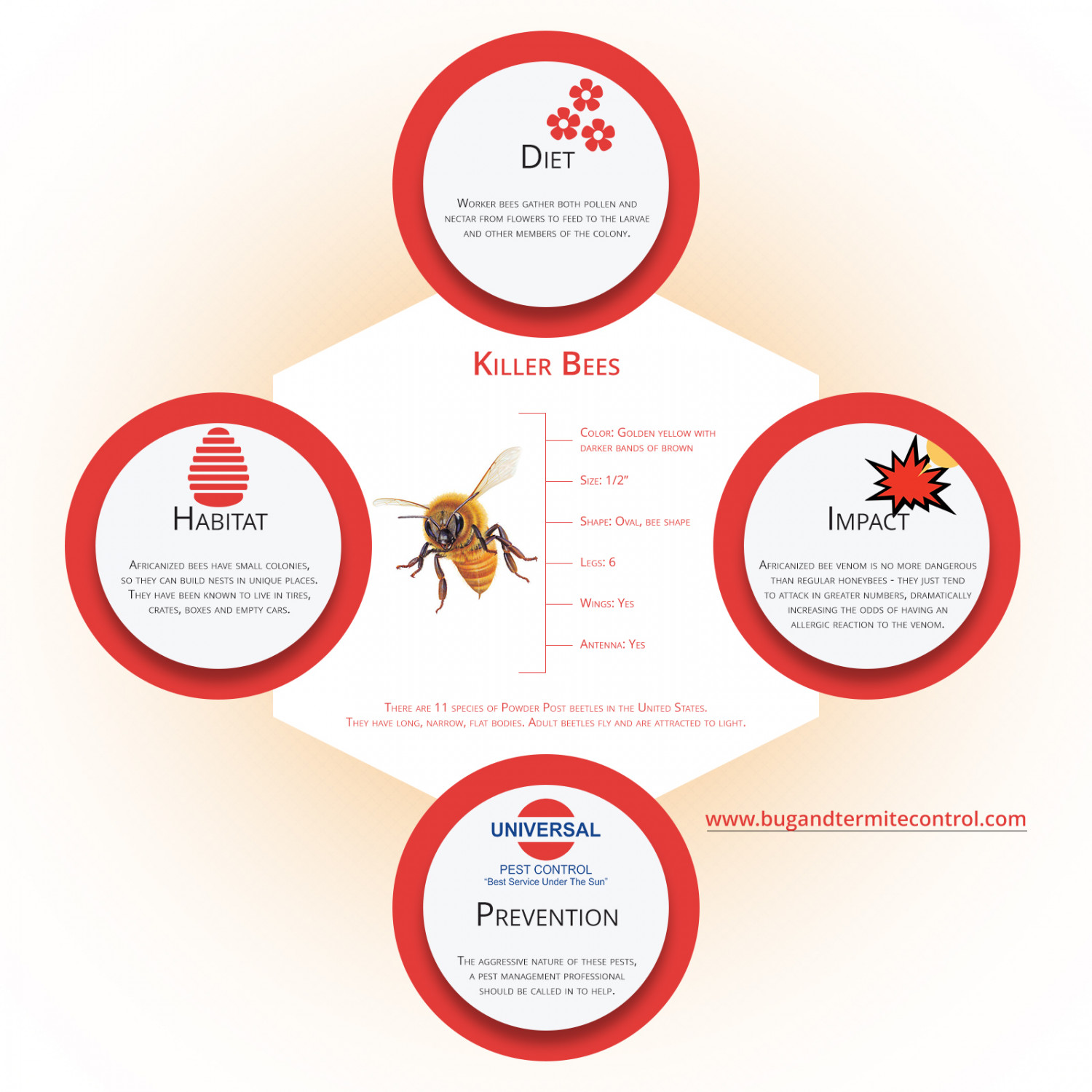 Blast Away The Killer Buzz Infographic