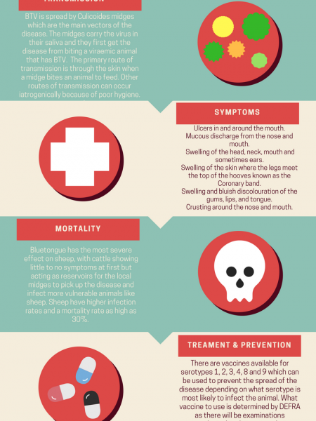 Bluetongue disease by MedlinkStudents Infographic