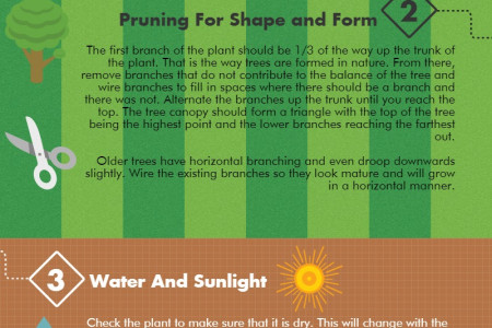Bonsai Care Instructions for Beginners Infographic