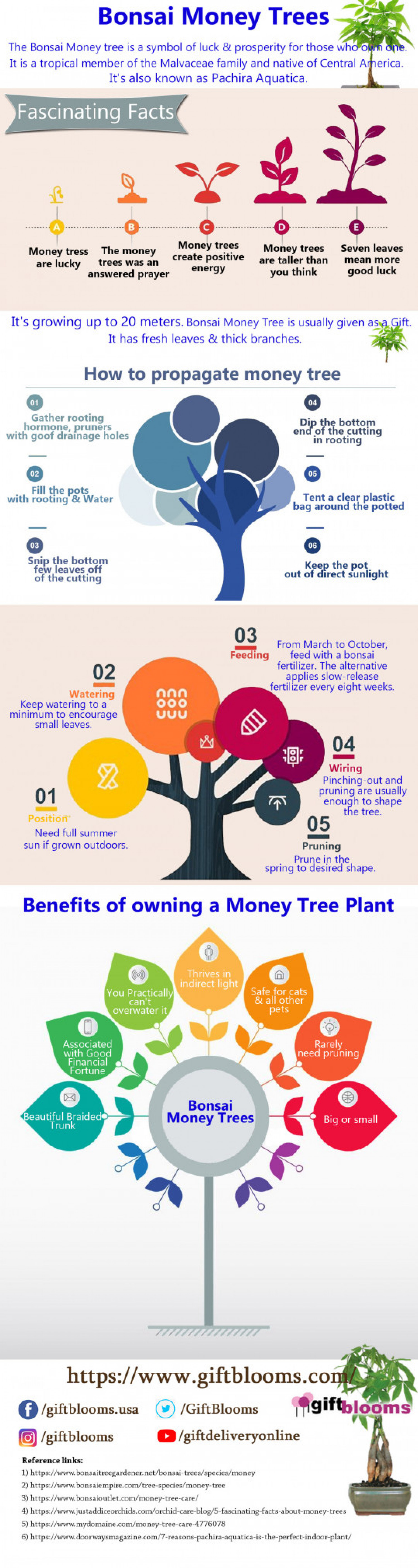 Bonsai Money Trees Infographic
