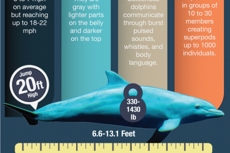 Bottlenose Dolphin Genus Infographic Infographic