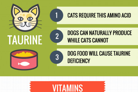 Can Cats Eat Dog Food? Infographic