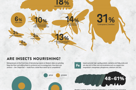 Can Insects Feed a Hungry Planet? Infographic