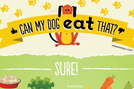 Can My Dog Eat That?  Infographic