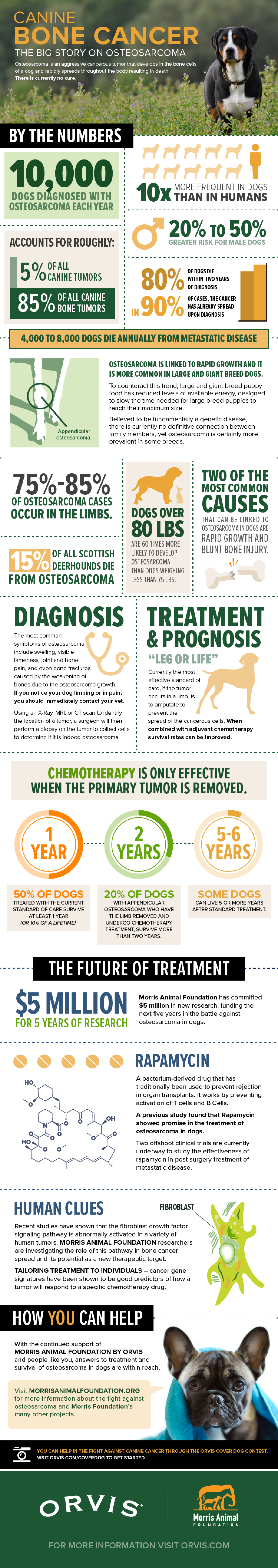 CANINE BONE CANCER: THE BIG STORY ON OSTEOSARCOMA Infographic
