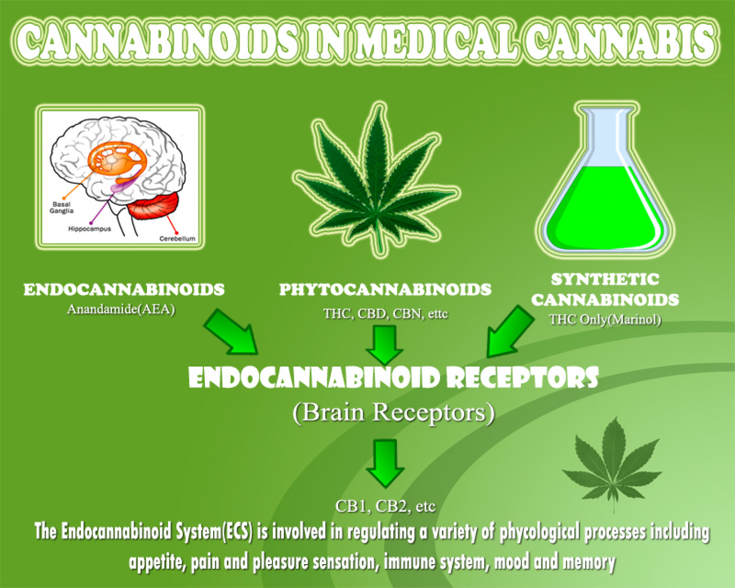 Cannabinoids In Medical Cannabis Infographic