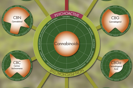 Cannabis: 14 Effects of 10 Cannabinoids Infographic