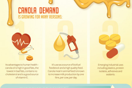 Canola: Canada's Golden Crop Infographic