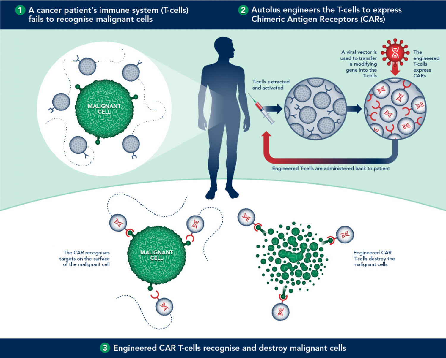 car-tcell-immunotherapy_54ecb6d9ee261_w1