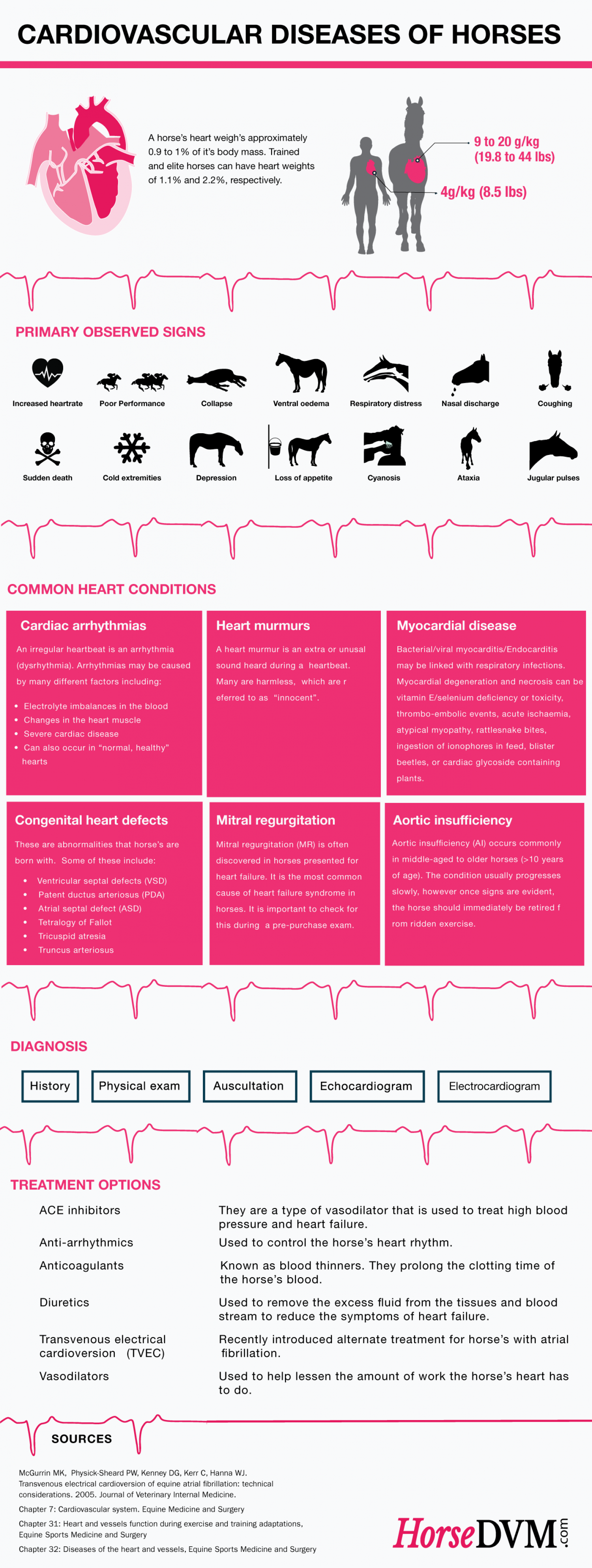 Cardiovascular Diseases of Horses Infographic