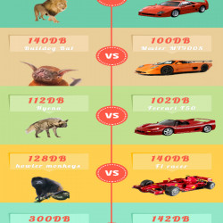 Care Engine Noises: How Loud Is Too Loud | Visual ly