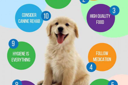 Caring For A Puppy With A Broken Leg Infographic