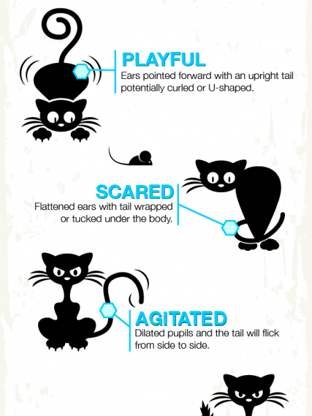 Cat body language Infographic