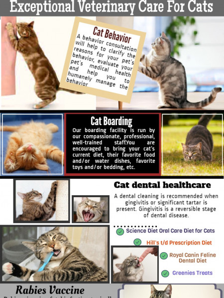 Cats Only Veterinary Clinic in West Palm Beach Infographic