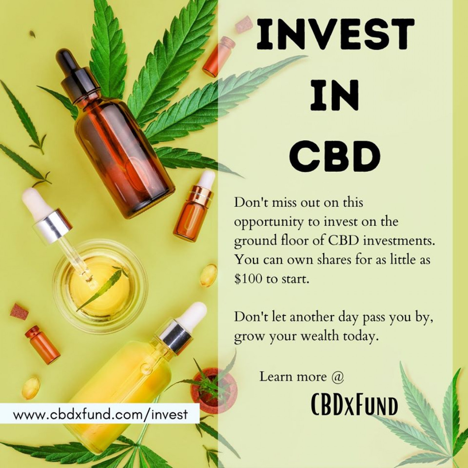 CBD Investments Infographic