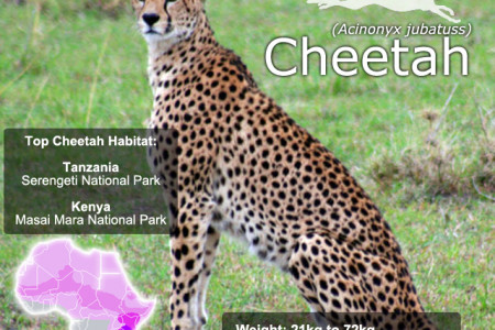 Cheetah SnapFacts Infographic