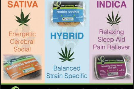 Choose Your Cannabis Strain: Sativa, Indica, or Hybrid? Infographic