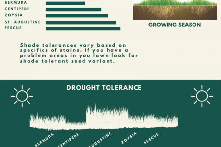 Choosing the Right Grass for Your Lawn Infographic