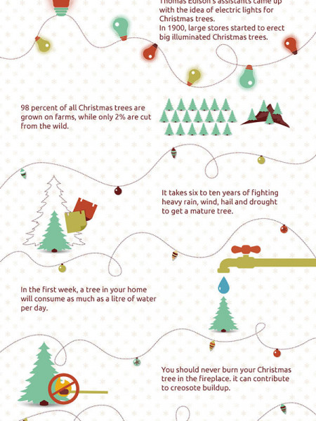 Christmas In Trees Infographic
