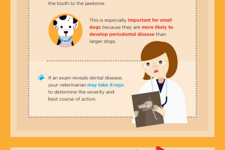 Clean as a Hound's Tooth: Your Guide to Canine Oral Health Infographic