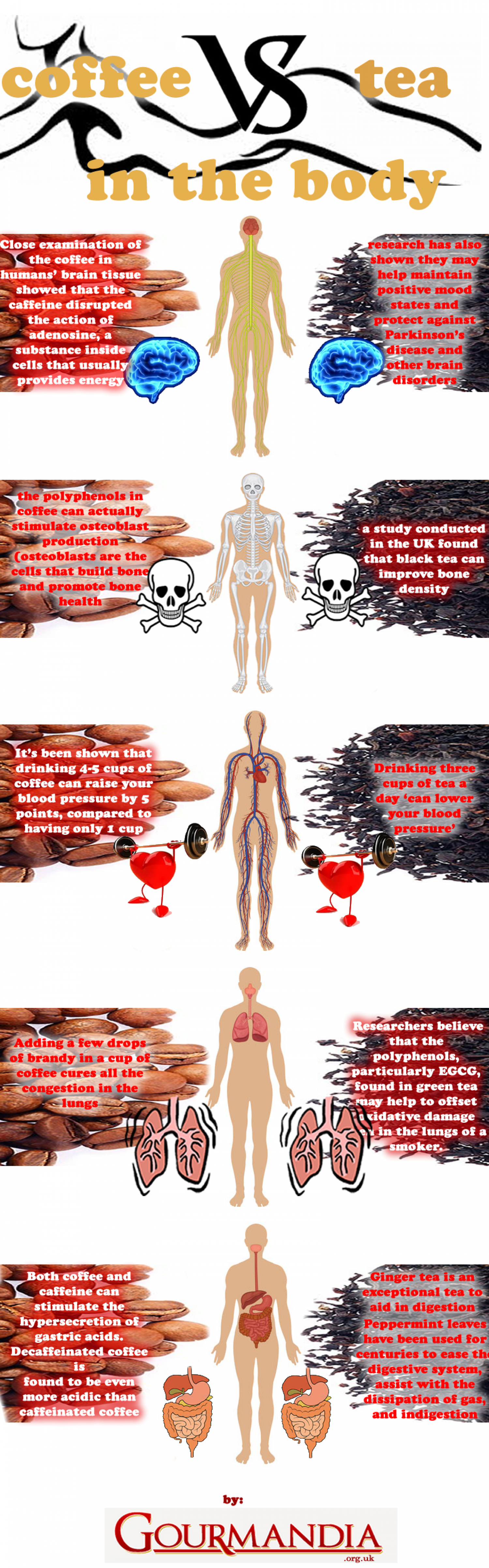 Coffee Vs. Tea in the Body Infographic