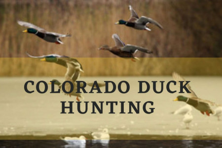 Colorado Duck Hunting Infographic
