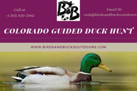 Colorado Guided Duck Hunt Infographic